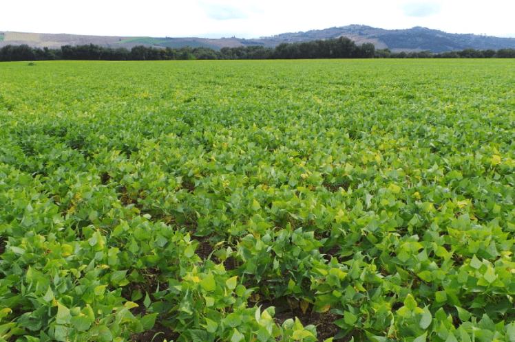 Agricolt Brandoni | Coltivazione Ortaggi nelle Marche per la Filiera Alimentare