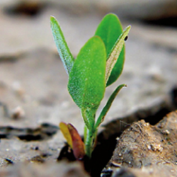 Agricolt Brandoni | Resilienza